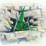 Todos ganhariam com a legalização de um hábito que já é costume