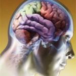 Nesta terça, debate sobre maconha medicinal na Neurobiologia da Unifesp