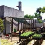 Como funcionam os clubes que produzem maconha legalmente no Uruguai?