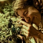 Uruguai já tem 1.200 cultivadores legais de maconha e 500 clubes de cannabis