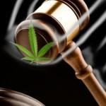 Juiz absolve usuário que plantava maconha