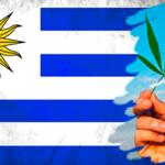 Deu ruim? Venda de maconha em farmácias no Uruguai é adiada para 2017