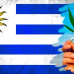 Uruguai diz que serão vendidos 400 kg de maconha em farmácias a partir de julho
