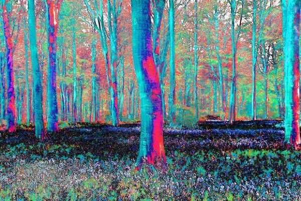 psychedelic-trees